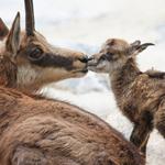 حنان الام .. القبلة الأولى