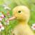 الربيع بسمة الطبيعة قبل أن تجود بعطائها..إذ لا قيمة للعطاء إذا لم ترافقه بسمة الرضى
