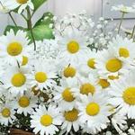 مهما  كان المزاج معكر فالورود البيضاء تفي بالطاقلة الايجابية
