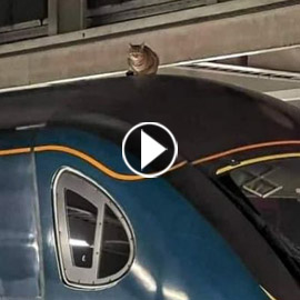 قطة عنيدة تعطل رحلة قطار سريع في لندن وعمال المحطة فشلوا بإبعادها
