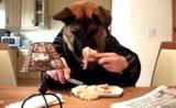 لا يصدق مش معقول كيف تم تدريبهم على الأكل