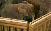 اخفاء الفيل