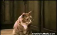 مقاطع من عالم القطط 2